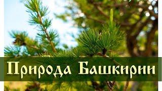 Природа Башкирии: Муракаево - гора Куркак 1008м | Lumix fz1000 video test