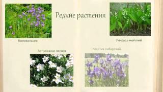 Проект Красная книга 2 класс 518 школа Спб. автор Митронина Янина