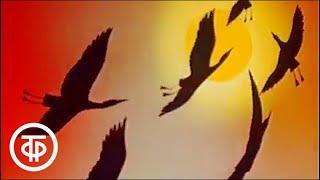 В мире животных. Природа Башкирии. Эфир 18.09.1982 г.   В мире животных