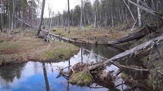 Весенняя рыбалка на малых реках. Ловля щуки весной
