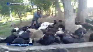 Стадо овец погибло от удара молнии в Зианчуринском районе