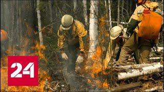 Генпрокуратура выявила факты намеренных поджогов леса в Сибири - Россия 24