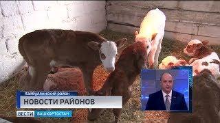 Новости районов за 18.03.19