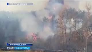 В Башкортостане горит бурзянский лес
