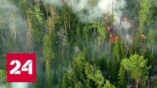 На помощь пожарным пришла авиация: как тушат лесные пожары с воздуха - Россия 24