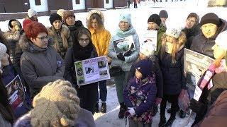 UTV. Защитники животных призывают уфимцев подписать петицию за создание зоополиции