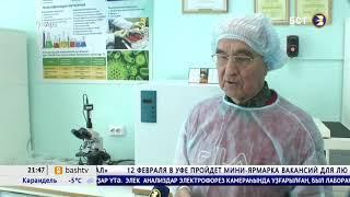 БСТ. Новости, 05.02.2020 - Ученые Башкирии запатентовали новые сорта картофеля