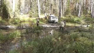 Путешествие в тайге, В поисках дикой природы Омская область 2015 год Сентябрь