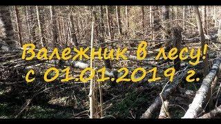 Сбор валежника в лесу с 1 января 2019 г. Очередной сырой закон.