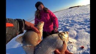 МАША + КОМБАЙНЫ =БЕШЕННЫЙ КЛЕВ КРУПНОГО ЛЕЩА!!Рыбалка 2020 рыбалка на Оби,поставки.