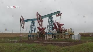 Нефтяники высадили 3000 саженцев