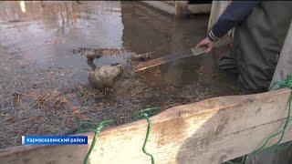 В Башкирии половодье набирает силу: дома уходят под воду, гибнет домашний скот