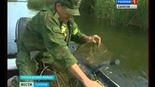 В регионе действует запрет на ловлю раков