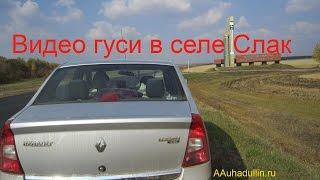 Видео гуси -село Слак Башкирия