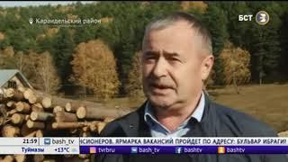 В Башкирии появится лесопромышленный кооператив