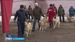 В Уфе прошла выставка охотничьих собак