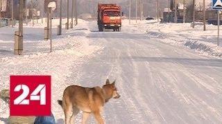 В Башкирии научились обращаться с отходами: в регионе скоро заработает экотехнопарк - Россия 24