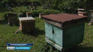 Стала известна причина, по которой массово гибнут пчелы в Башкирии