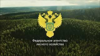 Лес – национальное достояние России!