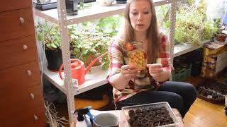 Когда сеять землянику на рассаду, как сеять землянику