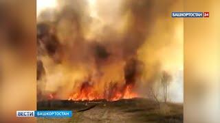 В Баймакском районе Башкирии горит трава - ВИДЕО
