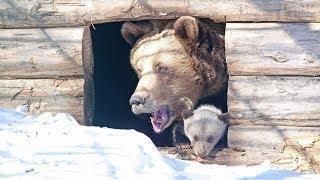 В Уфе на свет появились медвежата