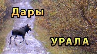 Дары Урала (Путешествие на Север)