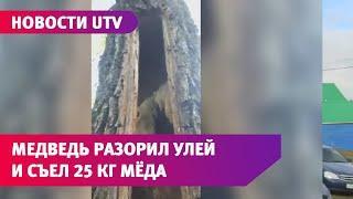 В Башкирии медведь оставил нацпарк без меда