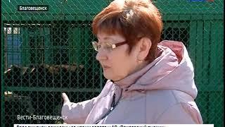 Жительница Благовещенска лишилась руки после попытки покормить медведя