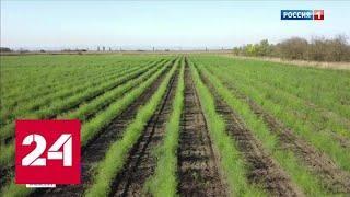 В Северной Осетии собрали первый урожай спаржи - Россия 24