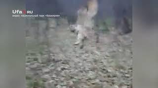«Чупакабру» выпустили на свободу