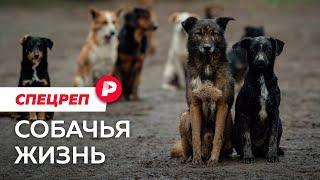 Почему российские города захватывают бездомные животные? / Редакция спецреп