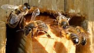 Экология и мы - 30.07.19 В чем причина стремительного сокращения численности домашних и диких пчёл?