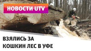 UTV. В Кошкином лесу в Уфе начали вырубать старые деревья
