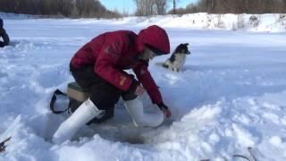 Зимняя рыбалка  Река Белая  Февраль 2016 г
