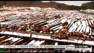 Башкортостан стал лидером по объему реализованной древесины - 15.07.2016 г .