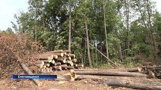В лесах Благовещенского района строится свалка площадью 42 гектара
