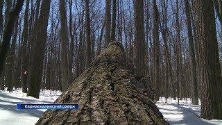 Валежник в лесу теперь можно будет собирать бесплатно
