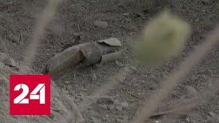 В Сирии боевики обстреляли селение Кардаха: один человек погиб, трое ранены - Россия 24