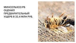 МИНСЕЛЬХОЗ РБ ОЦЕНИЛ ПРЕДВАРИТЕЛЬНЫЙ УЩЕРБ В 32,4 МЛН РУБ.