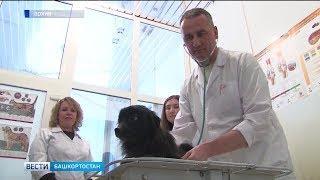 В Башкирии стартовала акция по бесплатной вакцинации домашних животных от бешенства