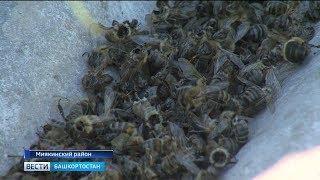 В семи районах Башкирии массово гибнут пчёлы