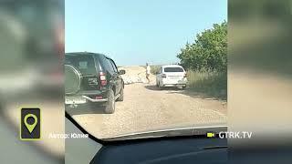 Стая гусей устроила пробку на трассе в Башкирии