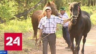 В Татарстане и Башкирии отмечают национальный праздник Сабантуй - Россия 24