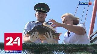 Не больше 5 килограммов: в РФ вводятся ограничения на любительскую рыбалку - Россия 24