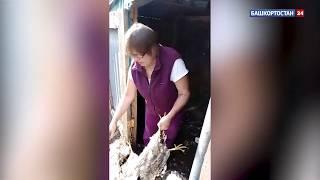«Чупакабра вернулась»: в Башкирии неизвестный зверь выпотрошил кроликов и кур