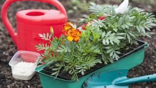 И в саду, и в огороде. Выращивание рассады однолетних цветов