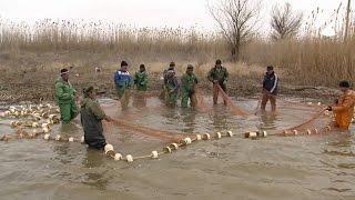 Астраханские рыбаки: уловы рыбы снизились в шесть раз