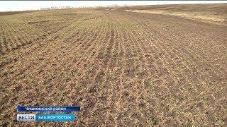 В республике могут объявить режим ЧС из-за гибели озимой пшеницы