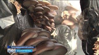В Кушнаренковском районе появились гигантские грибные плантации